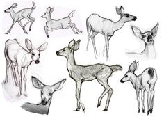 How to draw animals; tips and tricks ✤ || CHARACTER DESIGN REFERENCES | Find more at https://www.facebook.com/CharacterDesignReferences if you're looking for: #line #art #character #design #model #sheet #illustration #expressions #best #concept #animation #drawing #archive #library #reference #anatomy #traditional #draw #development #artist #pose #settei #gestures #how #to #tutorial #conceptart #modelsheet #cartoon || ✤