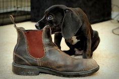 Die 37 besten Bilder von Blundstone boots | Wolle kaufen