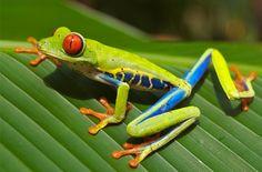 25 motivos para conhecer a Costa Rica - Viajali