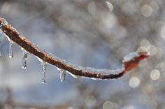 drips on branch