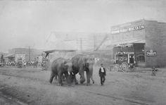 Jackson Parish, Louisiana. Circus came c. 1905. Main Street, Jonesboro.