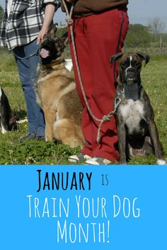 January is Train Your Dog Month! https://www.pawlife.com/pet-resources/january-is-train-your-dog-month/?utm_campaign=coschedule&utm_source=pinterest&utm_medium=Pawlife&utm_content=January%20is%20Train%20Your%20Dog%20Month%21