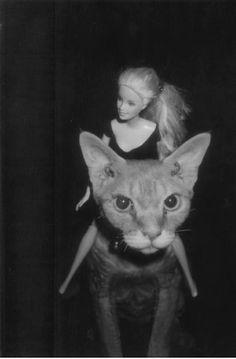 barbie/cat