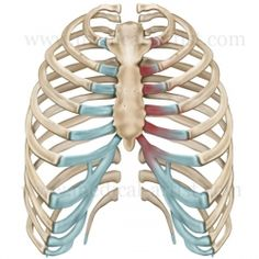 how to recover from costochondritis naturally | fibromyalgia, Skeleton