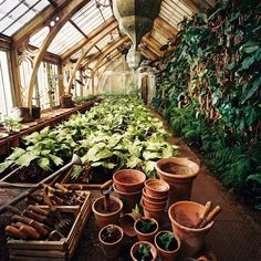 HARRY POTTER AND THE CHAMBER OF SECRETS, The greenhouse at Hogwarts, 2002, (c) Warner Brothers