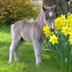 This is the cutest little pony!