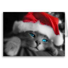 Soft kitten. Christmas Cat, Kitty greeting Card. Santa hat. Cute. Christmas, Seasonal, Festive, Holidays, Gifts, Presents, Santa Claus, Father Christmas,