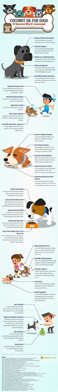 Why Your Dog Needs Coconut Oil - Infographic