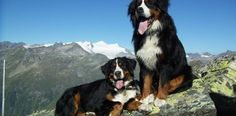 Wandern mit Hund im Nationalpark Hohe Tauern im Salzburger Land - Urlaub mit Hund Outdoors, Dogs, Animals, Cats, Pet Dogs, National Forest, Hiking, Tips, Animales