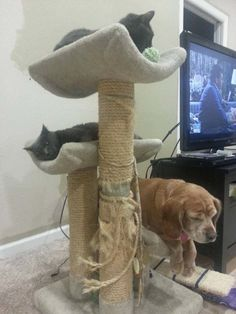 20 Dogs That Really Want To Be Cats. #10 Is Super Impressive