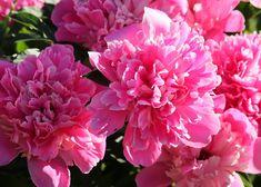 Keskikesä December 22, Fused Glass, Blue Flowers, Rose, Plants, Pink, Plant, Roses, Planets