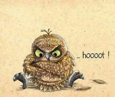 Me: The grumpy owl doesnt give a hoot! Owl: But. Owl Photos, Owl Pictures, Betty Boo, Owl Always Love You, Beautiful Owl, Wise Owl, Owl Bird, Bird Illustration, Painting & Drawing