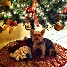 All i want for Christmas is you! All I Want, Things I Want, Gucci, Dogs, Christmas, Baby, Animals, Xmas, Animales
