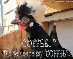 """Coffee...?  Did someone say """"COFFEE?!"""""""