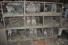 Humane society of Tampa Bay : Save animals by shutting down puppy mills, make amends to Florida house bill 7087 Buy Puppies, Dogs And Puppies, Black Lab Names, Puppy Mills, Animal Welfare, Pet Store, Humane Society, Yorkie, Dog Breeds