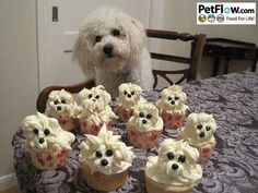 "I am not always mushy but I couldn't resist these ""Pupcakes"""