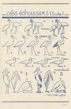 how to draw birds - french art tutorial (les animaux 35 by pilllpat (agence eureka)) Bird Drawings, Easy Drawings, Animal Drawings, Drawing Sketches, Sketching, Drawing Lessons, Drawing Techniques, Art Lessons, Learn To Draw