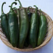 Hot Met F1 paprika: Chili típusú paprika. Termése sötétzöld hegyesedő, 10-13 cm hosszú, igen csípős. Erőteljes növekedésű, bőtermő, könnyű szedni. Chili, Pickles, Cucumber, Hot, Zucchini, Vegetables, Red Peppers, Chile, Vegetable Recipes
