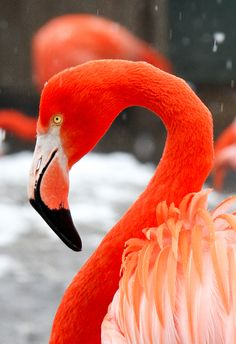 Orange Flamingos 2 by Mark Dumont, via 500px