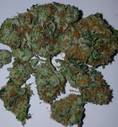 Buy OG Kush is an American marijuana classic, a Southern California original with some of the highest THC levels in the world. With a sativa/indica. Cannabis Seeds Online, Cannabis Seeds For Sale, Medical Cannabis, Cannabis Oil, Growing Marijuana Indoor, Cannabis Growing, Cannabis Plant, Autoflowering Seeds, Medical Marijuana