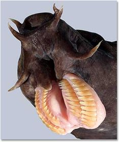 It's a hagfish. It's gonna cut you for reals.