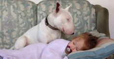 A #beautiful #bully story for all...  The Story of Layla and Alfie – Best Friends Forever  http://marknpablo.com/bully-love-story-layla-alfie/