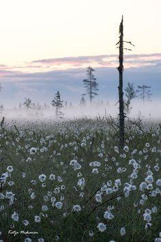 In Lappi, Finland