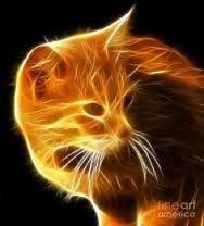 """Résultat de recherche d'images pour """"electric cat"""""""