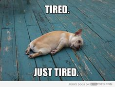 Is anybody else exhausted from finals week?