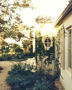 Love the vines in this Ojai garden at Patina Farm.
