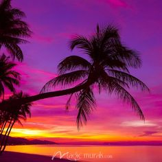 Palm tree silhouette at sunset on tropical beach Wall Mural ✓ Easy Installation ✓ 365 Days to Return ✓ Browse other patterns from this collection! Romantic Beach Photos, Beautiful Beach Pictures, Beautiful Sunset, Beautiful Beaches, Beach Sunset Pictures, Sunset Beach, Beach Sunset Painting, Beach Sunsets, Purple Sunset