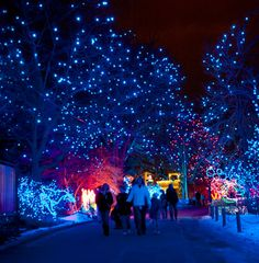 Denver Zoo Lights 5:30 pm to 9:00 pm December 5 2014 - January 4, 2015 Adults $11-$13, Children $7-$9 -- @shiremeade this is what I was talking about
