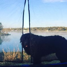 My big Newfie waiting for me to wake up on the first morning our camping trip. http://ift.tt/2mSnNGf