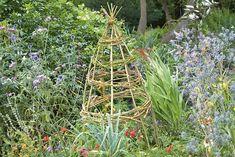 Flying Colourz Citrouille g/éante jardin organique doux verts l/égumes poussent d/énormes 5 graines