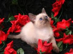 kitty in the roses