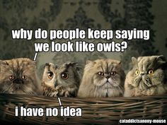 what owl like summer | ... 1345318427 Why do people keep saying we look like owls