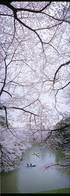 北の丸公園 (Kitanomaru Kōen) is a public park adjacent to the Imperial Palace and the address of its location as well.  / 北の丸公園は皇居に隣接する公園及び同所在地の地名。☆1-1, Kitanomaru Kōen, Chiyoda-ku, Tokyo, Japan / 東京都千代田区北の丸公園1-1