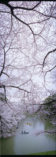 Kitanomaru park, Tokyo, Japan*