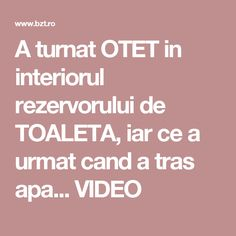 A turnat OTET in interiorul rezervorului de TOALETA, iar ce a urmat cand a tras apa... VIDEO Good To Know, Things To Do, Hacks, Cleaning, Health, Interior, Pandora, Bathroom, Crochet