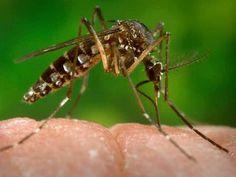 ¡Impacto! #Florida a punto de llegar al millar de casos por #Zika