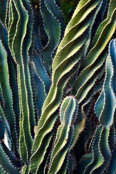 textuur: puntig/scherp structuur: cactus naalden