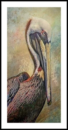Pelican Drawing, Pelican Art, Artistic Photography, Fine Art Photography, Bird Artwork, Bird Paintings, Camera Art, Fine Art Prints, Framed Prints