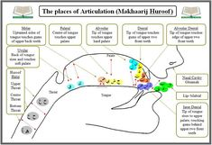The places of Articulation the Arabic letters