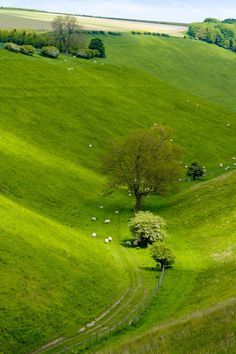 Yorkshire Wolds Way, England by alh1