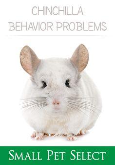 Chinchillas, Pet Health, Behavior, The Selection, Stress, Fur, Pets, Animaux, Behance