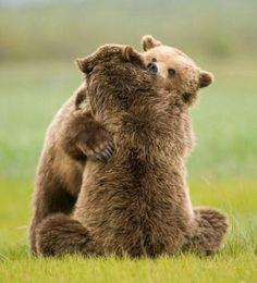 Ours se faisant un calin