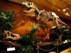 Mundo está à beira de uma extinção em massa, diz estudo Um artigo sobre a pesquisa foi publicado na revista Science. O estudo analisou as taxas de extinção passadas e presentes