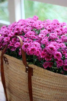 Φυσικά εντομοαπωθητικά -7 φυτά εσωτερικού και εξωτερικού χώρου που διώχνουν τα κουνούπια   GREEN   iefimerida.gr Pink Rose Flower, Pink Daisy, Yellow Flowers, Flower Blossom, Flower Images, Flower Pictures, Writing Styles, Flower Basket, Plants