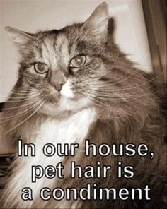 """in our house, pet hair is a condiment. No lie. I was in the hospital years ago. The husband asked if he could bring me anything. I asked for some Dog Hair. Explained: """"It's all way too sterile here. A little dog hair would make me feel more at home"""".  To this day, I'm sure Housekeeping wonders how that amount of dog hair got into the hospital, without a dog attached to it....."""
