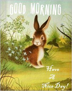 Good Morning Bunny                                                                                                                                                                                 More